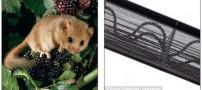 احداث پلی 290000 دلاری برای تردد موش ها