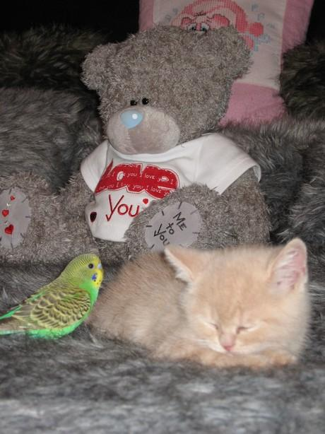 عکسهایی از دوستی عجیب گربه و طوطی