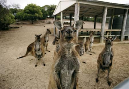 عکس های جالب و با مزه از حیوانات