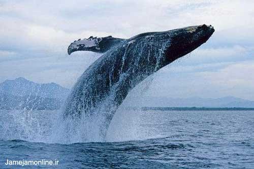 عکسهایی جذاب از حیات وحش