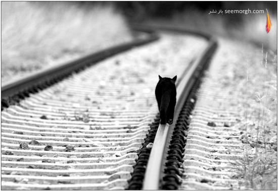 19 عکس مفهومی و تاثیرگذار سیاه و سفید!