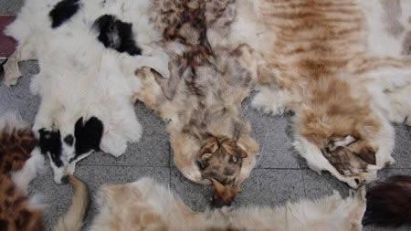 نابودی حیوانات با لباسهای پوست تن آنها