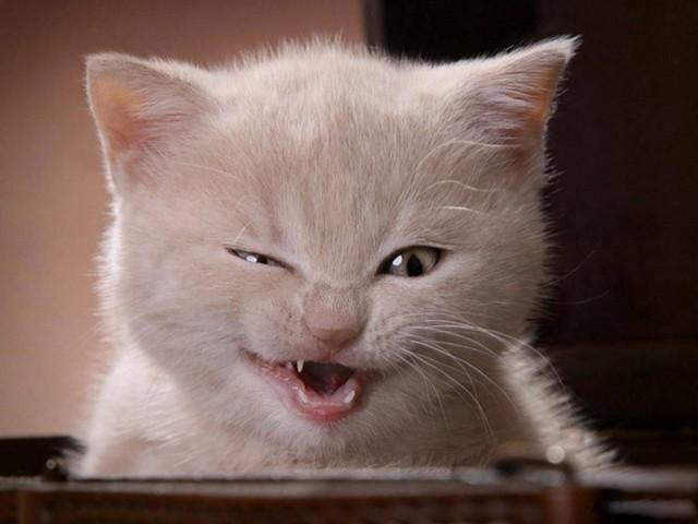 عکس هایی از بچه گربه های ناز و خوشگل