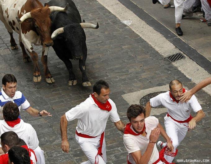 عکس هایی از جشن اسپانیایی ها با گاو وحشی !!