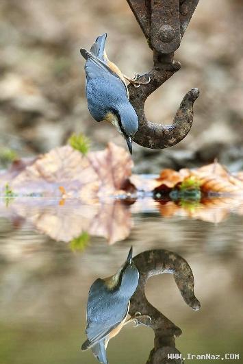 بوسه بر آب شاهکار بی نظیر عکاس انگلیسی+عکس