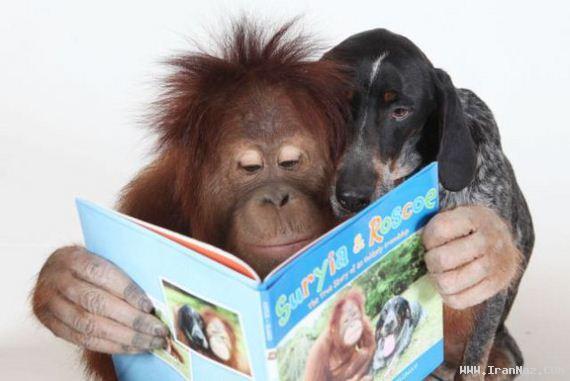عکس های دیدنی از رابطه جالب یک سگ و اورانگوتان