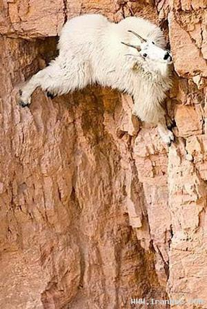 بالا رفتن از دیوار راست كه میگن یعنی این (تصویری)