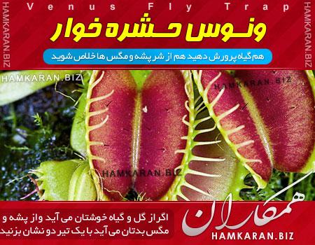 آیا می خواهید یک گیاه زیبای گوشت خوار داشته باشید؟!