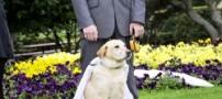پسری که عاشق سگ شد و با او ازدواج کرد +عکس