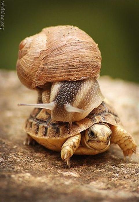 عکس های زوج های خنده دار و نا متعارف بین حیوانات
