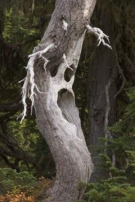 عکس هایی بسیار جالب از عجیب و غریب ترین درختان
