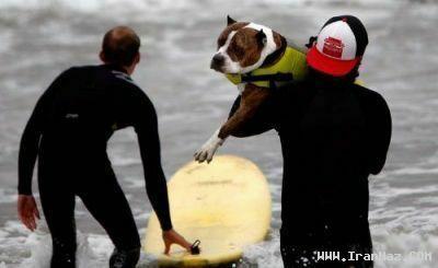 عکس های رقابت عجیب موج سواری توسط سگ ها