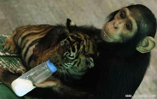 عکس های عجیب که میلیونها نفر را شیفته خود کرد! ، www.irannaz.com