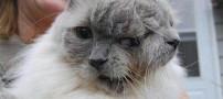 پیرترین گربه دوسر جهان و ثبت شده در گینس +عکس