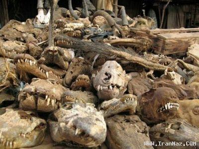 عکس های بازار بسیار ترسناک در یک کشور آفریقایی
