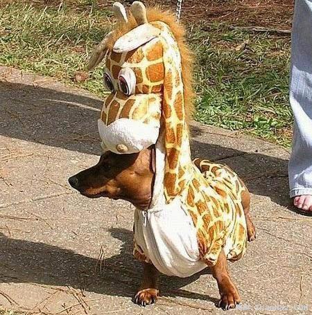 عکس هایی جالب و خنده دار از شو فشن سگ ها!!