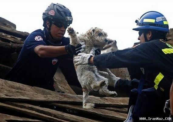عکس هایی باور نکردنی از امداد رسانی به حیوانات !! ، www.irannaz.com