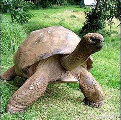 آیا پیرترین حیوان زنده دنیا را می شناسید؟! +تصاویر