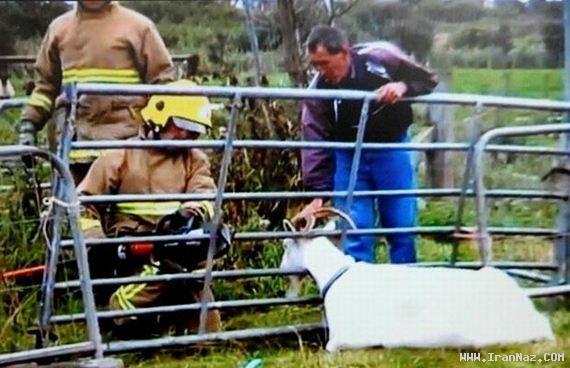 عکس هایی باور نکردنی از امداد رسانی به حیوانات !!