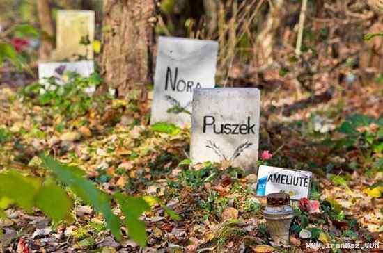 چهره عجیب یک سگ در قبرستان حیوانات!! +عکس