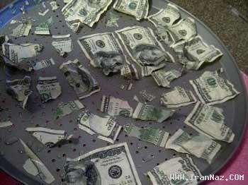 سگ خوش اشتها پول های صاحبش را خورد +عکس