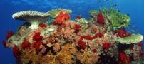 عکس هایی بسیار زیبا از اعماق دریا