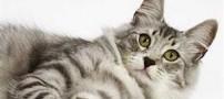 زنی پس از مرگ خود، گربه اش را میلیونر کرد! +عکس