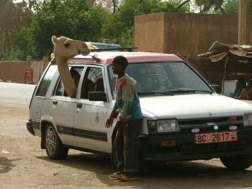 www.irannaz.com عکس های خنده داراز سوتی های دیدنی کشور افریقا