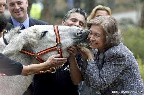 عکس های دیدنی از بوسیدن خر توسط ملکه اسپانیا!!