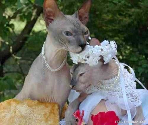 عکس هایی باور نکردنی از زیبا ترین عروس و داماد ها