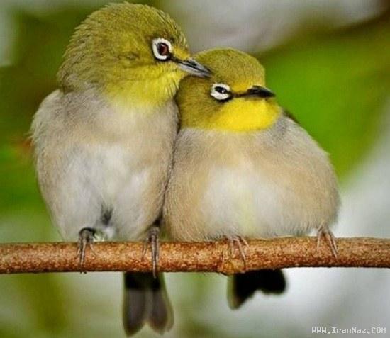 عکس های بسیار دیدنی از پاک ترین عشق های دنیا