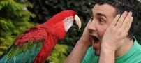 بی ادب ترین طوطی جهان که فقط … میدهد! +عکس