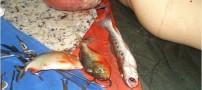 عکس های خورده شدن مردی توسط ماهی ( 16+)