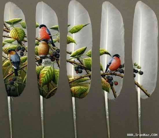 عکس هایی از نقاشی های خارق العاده و زیبا روی پر