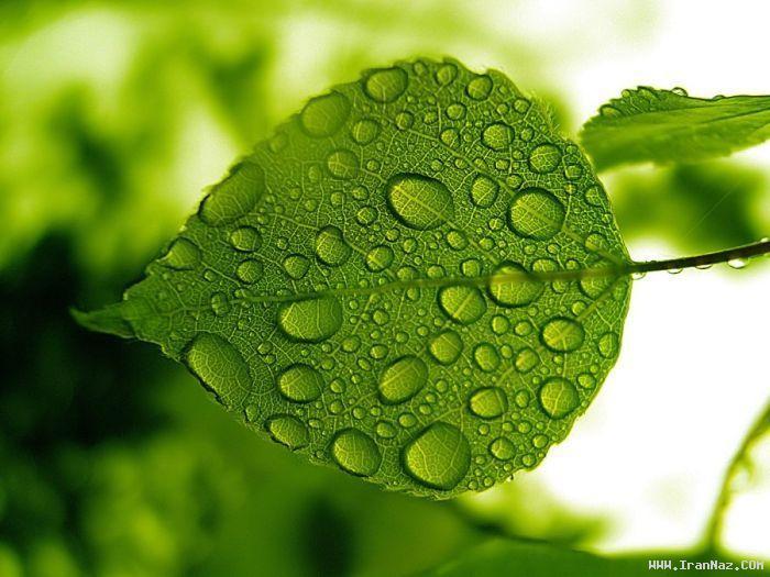 عکس هایی زیبا و دیدنی از قطرات باران بر روی گیاهان