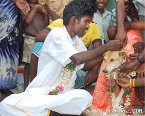 ازدواج احمقانه با یک سگ برای دور کردن شر! +عکس