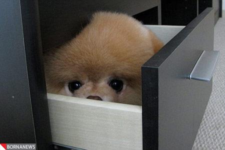 عکس های دیدنی از جذاب ترین سگ دنیا