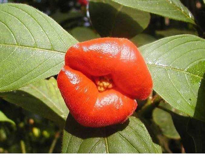 عکس عجیب ترین گل های دنیا