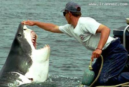 عشق عجیب کوسه ماده به یک مرد ماهیگیر! +عکس