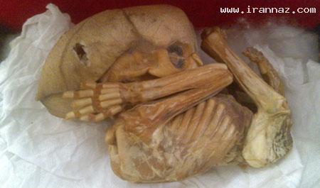 پیدا شدن کوتوله هایی عجیب الخلقه در تهران +عکس ، www.irannaz.com