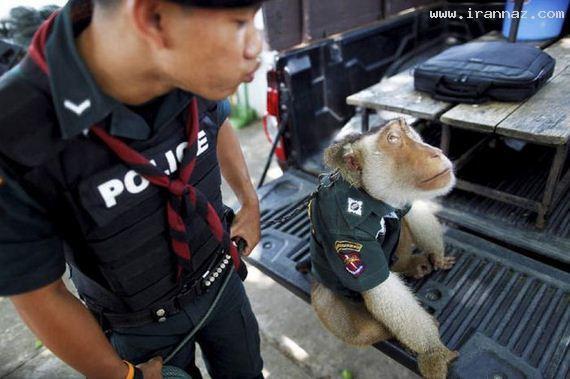 عکسهای خنده دار و بسیار جالب از سوژه های پلیس ، www.irannaz.com