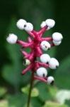 آشنایی با سمی و مرگبار ترین گیاهان جهان! +تصاویر