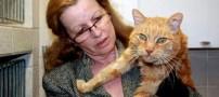 بازگشت یک گربه پس از 16 سال به خانه خود! +عکس