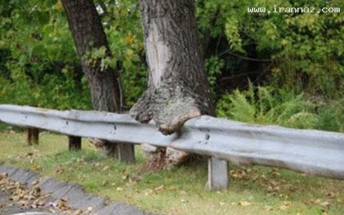 عکس های درختانی که اشیاء اطراف خود را میخورند!!