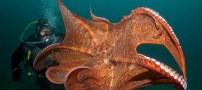 عکس هایی از هنر نمایی خداوند در اعماق اقیانوسها