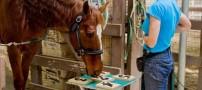 اسبی عجیب که مسائل ریاضی حل می کند! +عکس