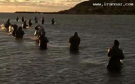 کمک دلفین ها به صیادان برای گرفتن ماهی! +تصاویر