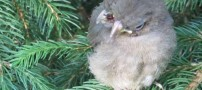 کشف پرنده ای کوچک با دو سر و سه منقار!! +عکس