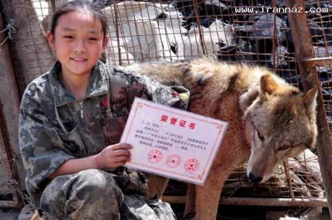 دوستی عجیب یک دختر 10 ساله با گرگ ها! +عکس