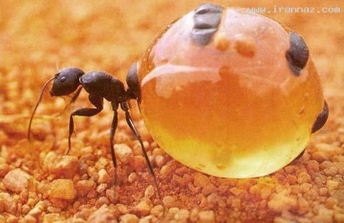عکس هایی که امکان ندارد تا این لحظه دیده باشید!!! ، www.irannaz.com